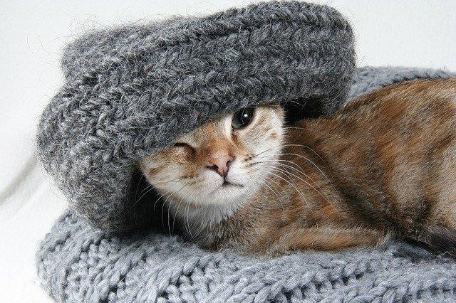Kat som bruger kattebakke