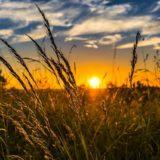Solen går ned over en sommereng